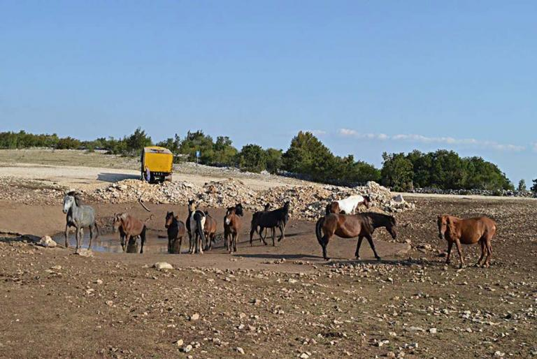voda konji