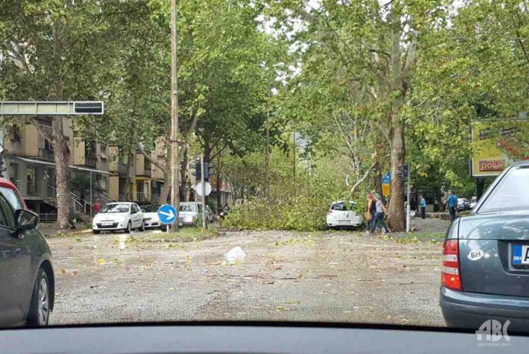 slomljeno stablo