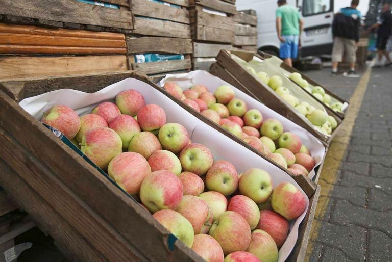 jabuke izvoz
